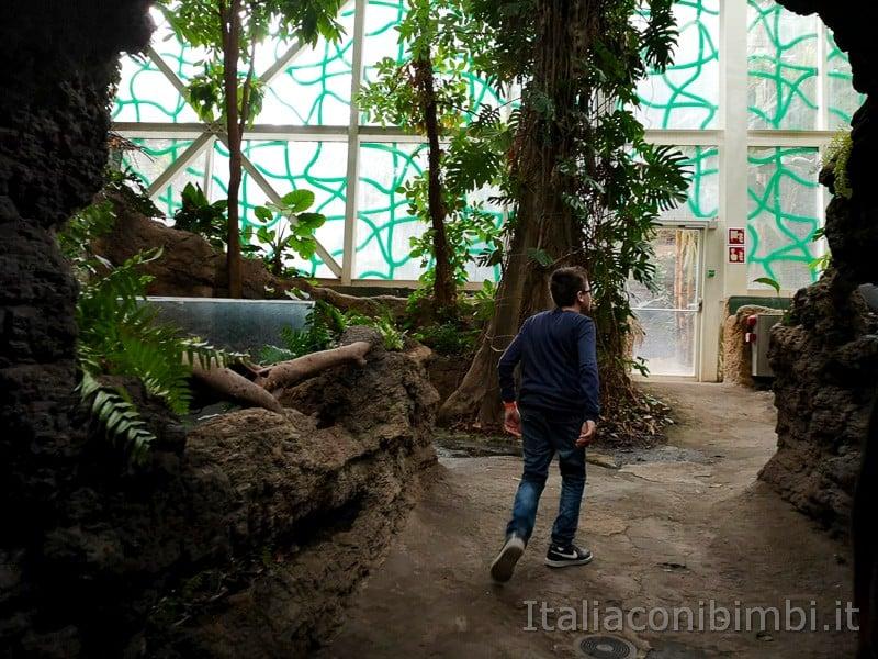 CosmoCaixa museo della scienza di Barcellona - foresta amazzonica