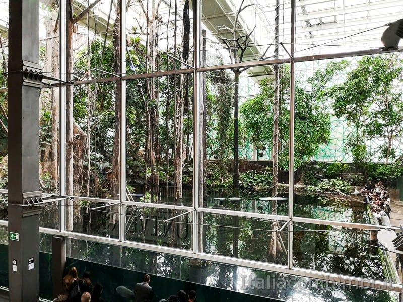 CosmoCaixa-museo-della-scienza-di-Barcellona-foresta-pluviale-amazzonica