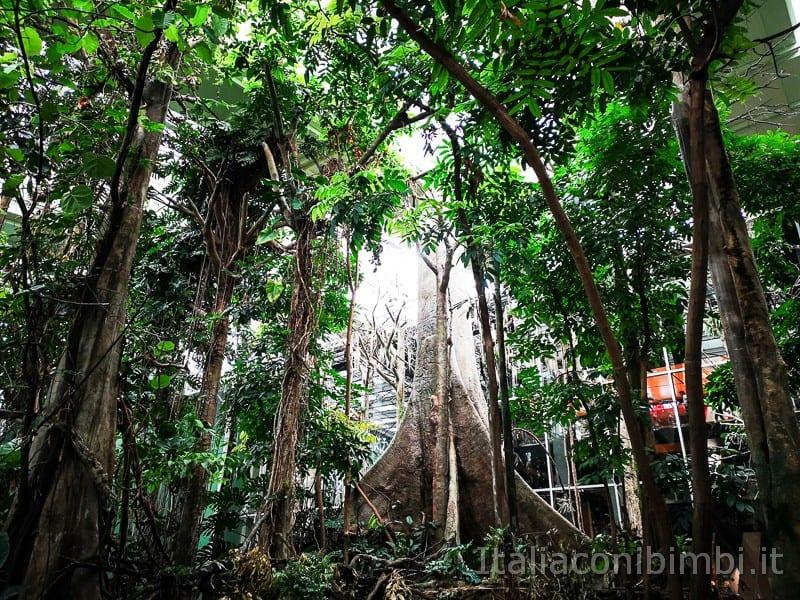 CosmoCaixa-museo-della-scienza-di-Barcellona-padiglione-foresta-amazzonica