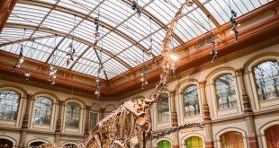Museo di scienze naturali di Berlino - dinosauro ingresso