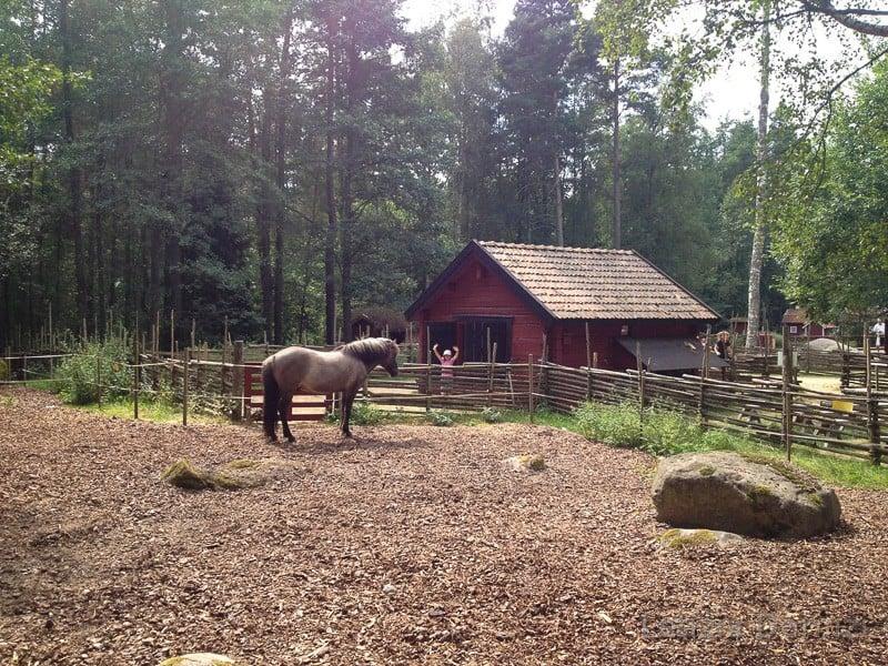 Parco di Pippi Calzelunghe - recinto con i cavalli