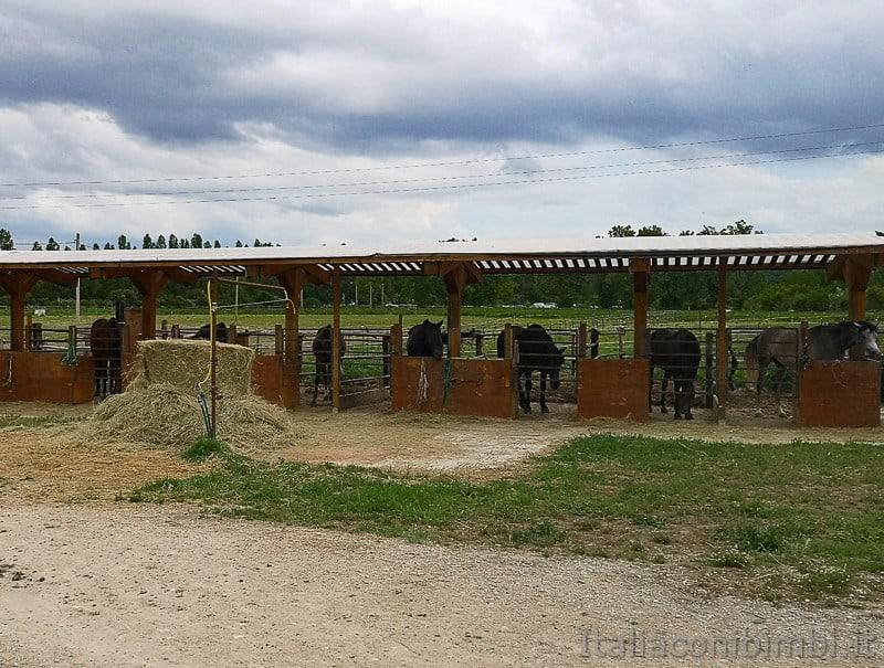 Abbadia di Fiastra- cavalli del maneggio Alba