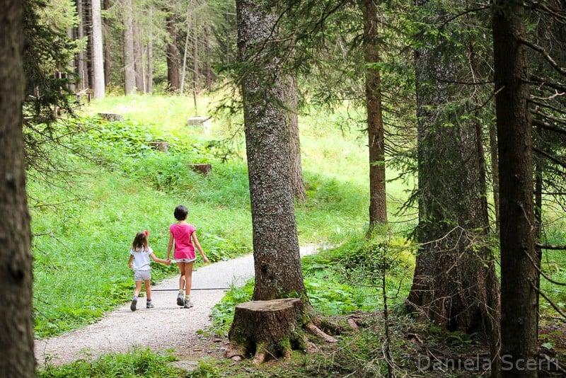 Trentino in camper con bambini- Foresta dei violini