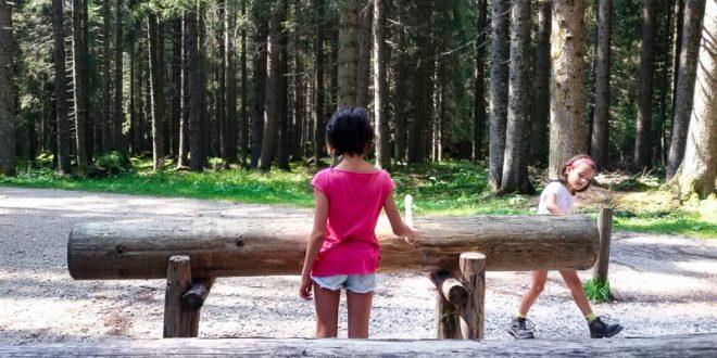 Trentino in camper con bambini- Foresta dei violini Paneveggio