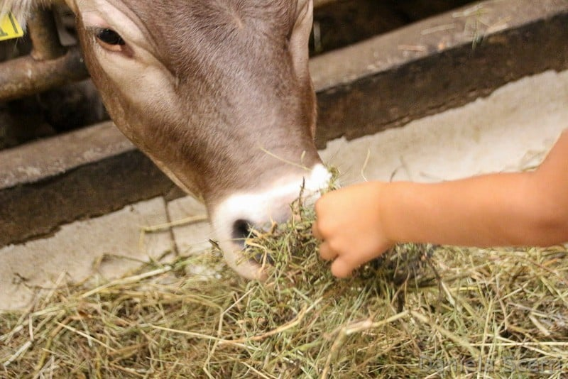 Trentino in camper con bambini- animali in fattoria