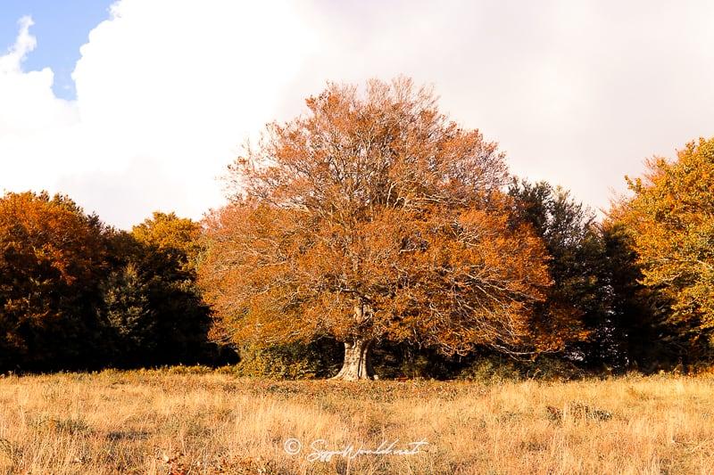 Canfaito-autunno-2020