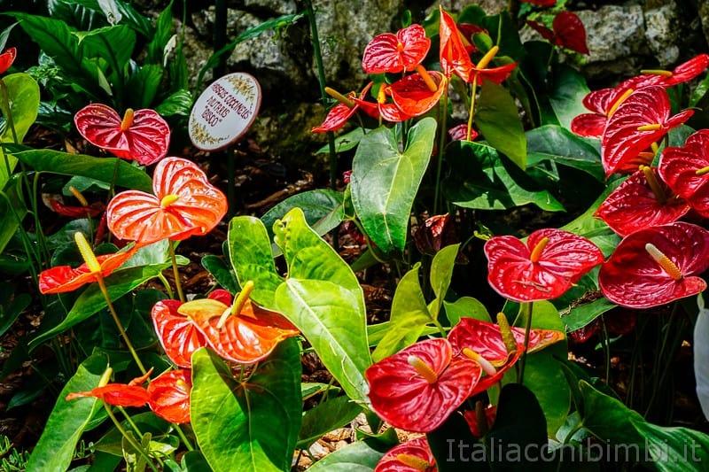 Cascata del Varone- fiori di hibiscus
