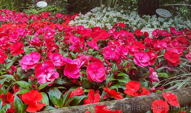 Cascata del Varone- fiori nel parco botanico