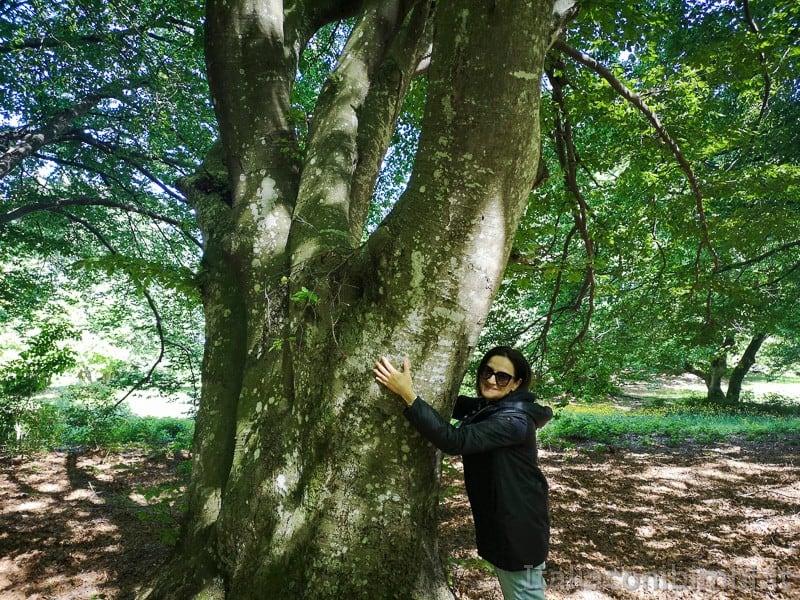Faggeta di Canfaito- abbracciare gli alberi
