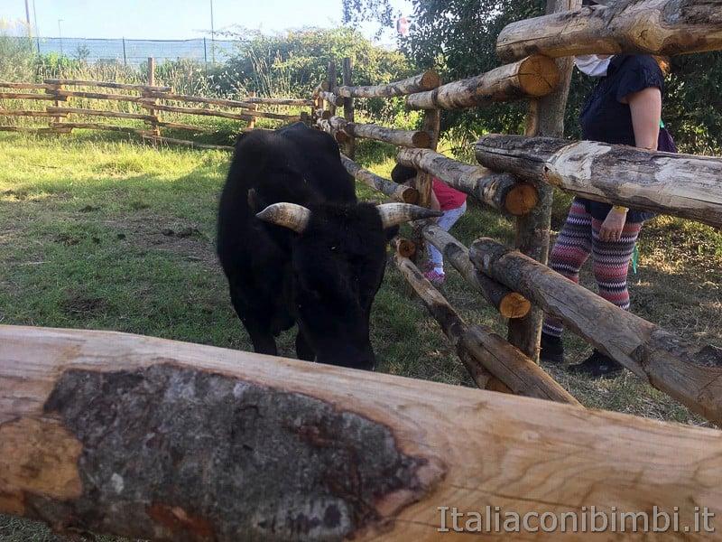 Roma World- toro alla fattoria
