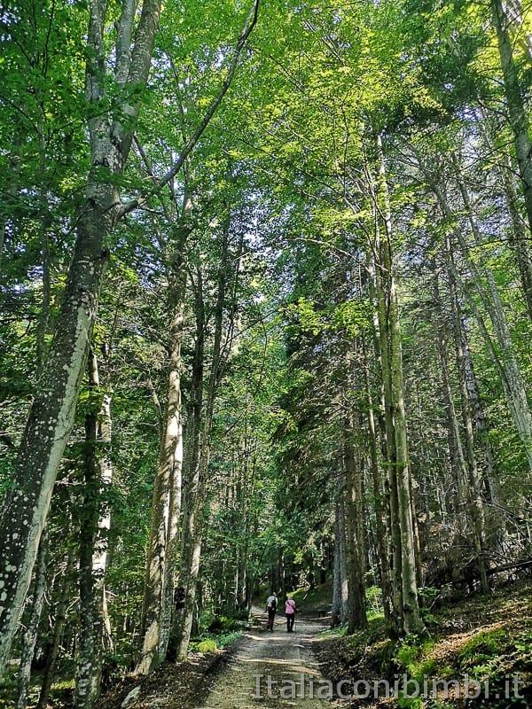 Sentiero il Respiro degli alberi- bosco