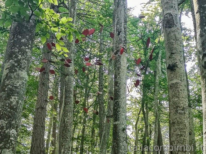 Sentiero il Respiro degli alberi- opera Sospensioni