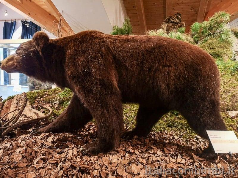Centro di documentazione Luserna - Alpe Cimbra- altro orso