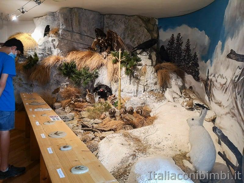 Centro di documentazione Luserna - Alpe Cimbra- animali di montagna
