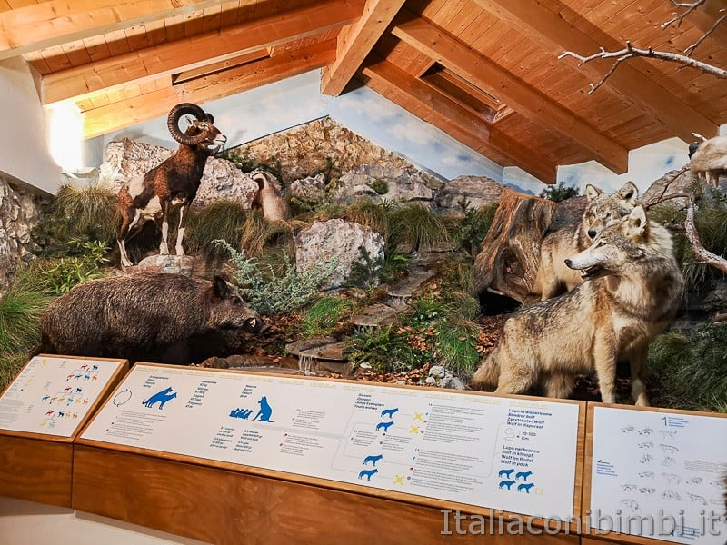 Centro di documentazione Luserna - Alpe Cimbra- animali imbalsamati