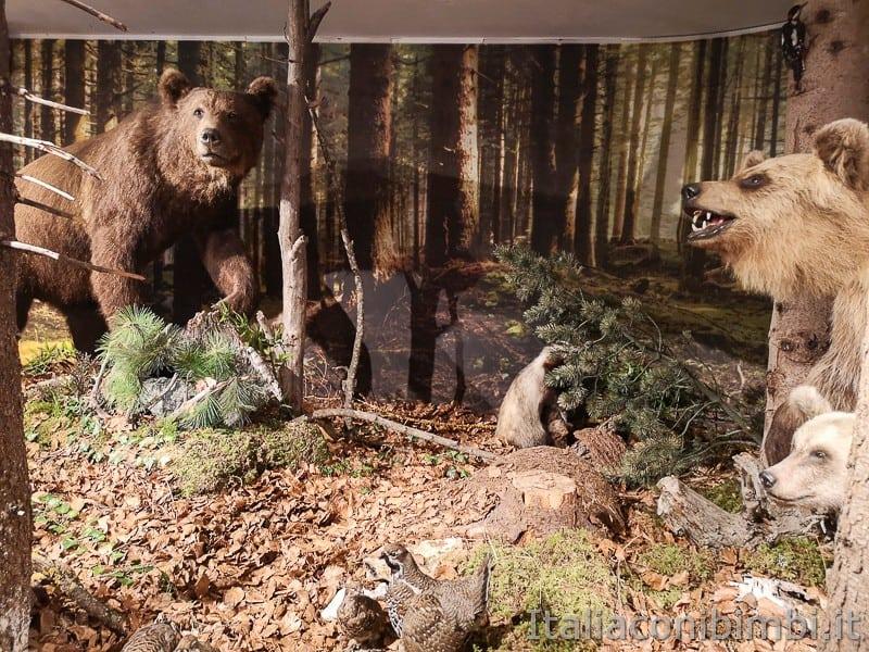 Centro di documentazione Luserna - Alpe Cimbra- orsi altro lato