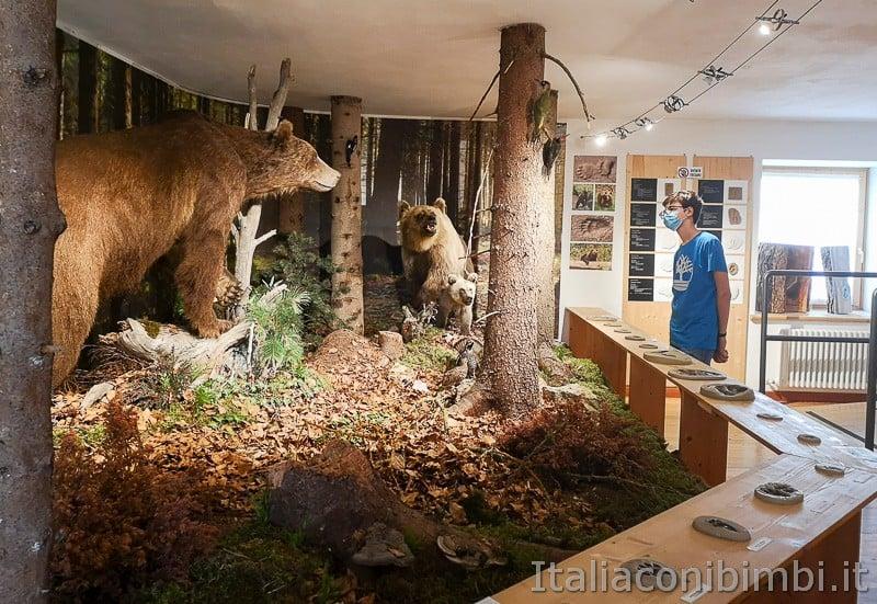 Centro di documentazione Luserna - Alpe Cimbra- orsi