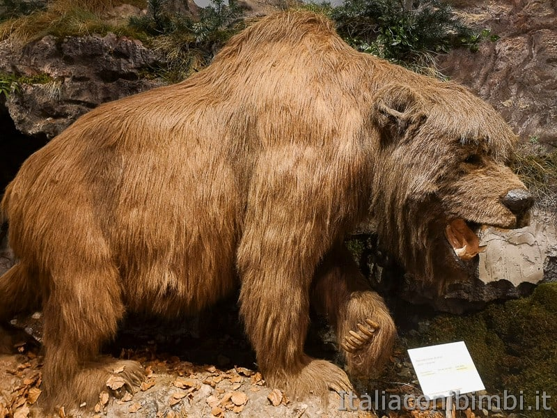 Centro di documentazione Luserna - Alpe Cimbra- orso