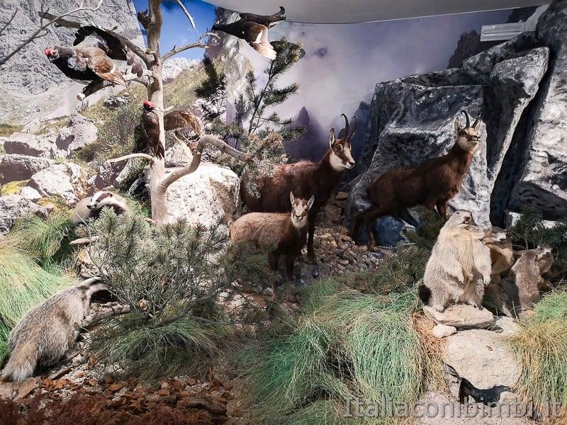 Centro di documentazione Luserna - Alpe Cimbra- stambecchi e animali di montagna
