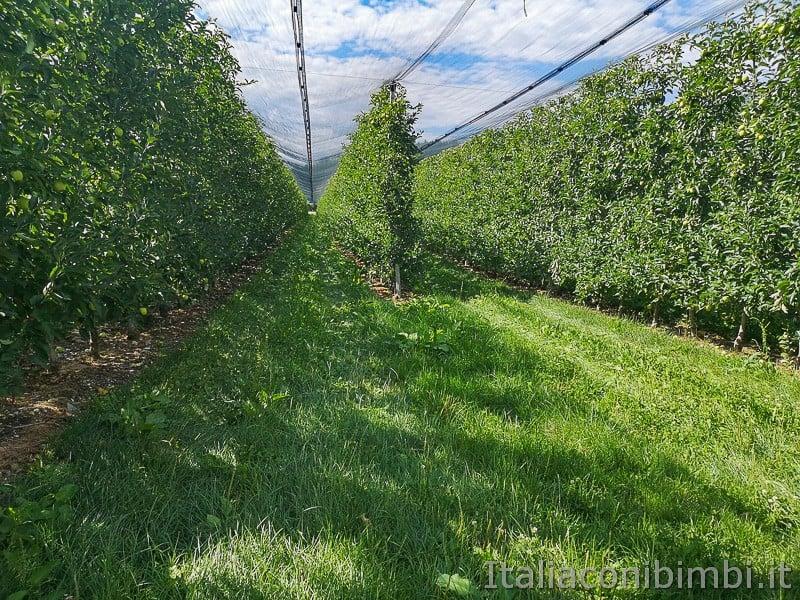 Ciclabile della Valsugana- campi con le mele