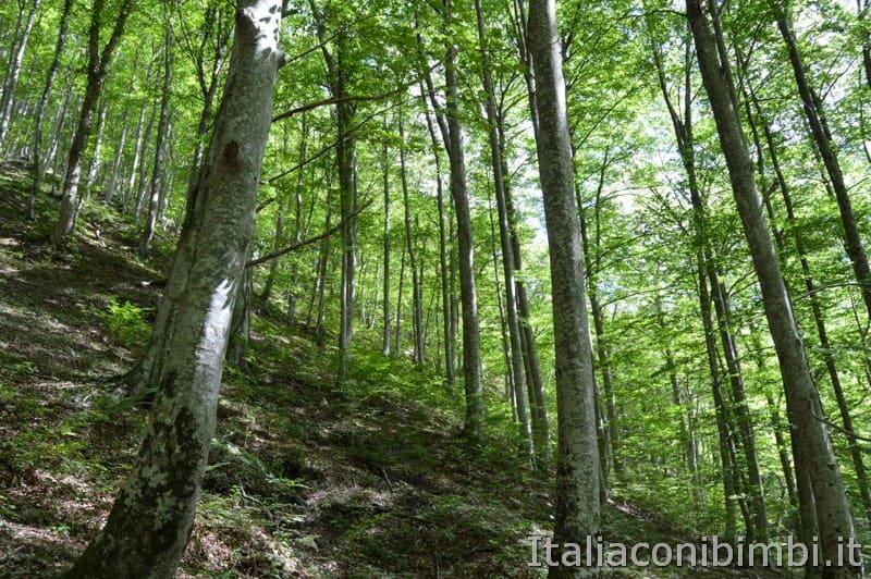 Gole dell'Infernaccio- bosco
