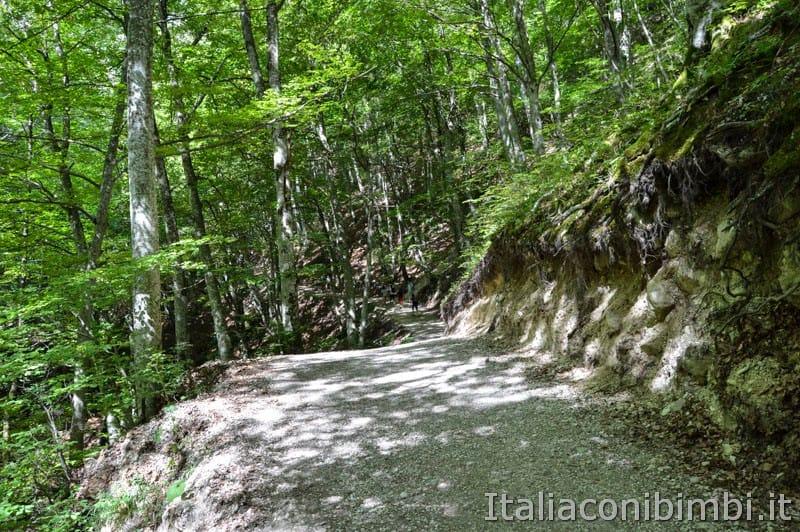 Gole dell'Infernaccio- sentiero nel bosco