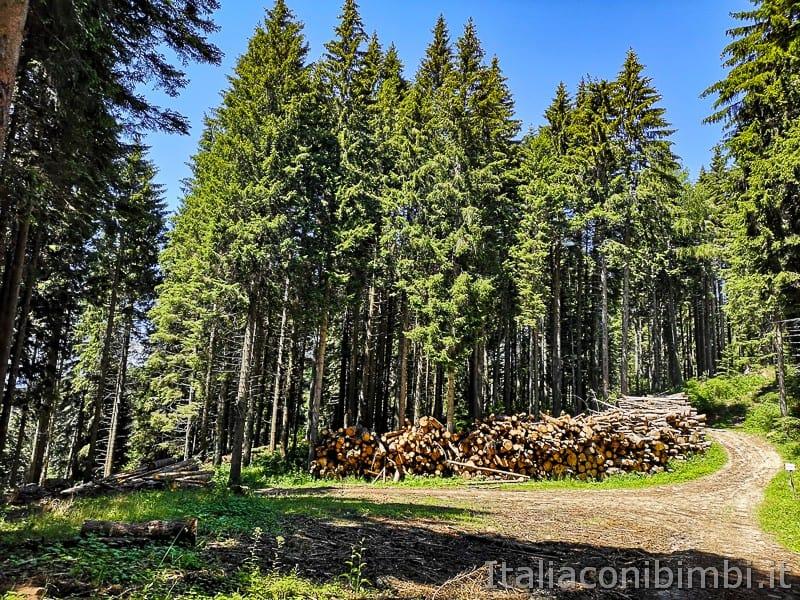 Sentiero dell'Immaginario Alpe Cimbra- catasta di legna
