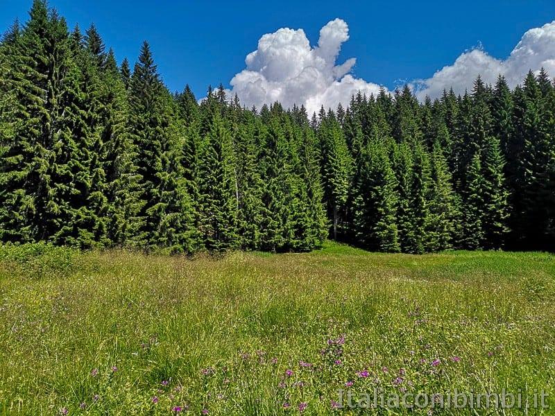 Sentiero dell'Immaginario Alpe Cimbra- laghetto ricoperto dalla vegetazione
