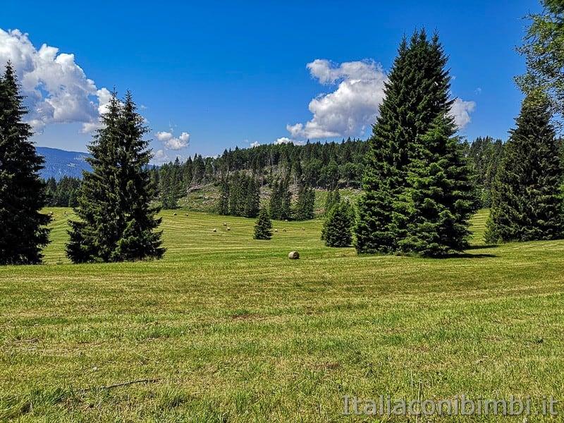 Sentiero dell'Immaginario Alpe Cimbra- panorama vicino a Malga Campo