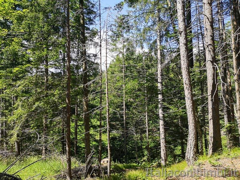 Sentiero delle Sorgenti - Alpe Cimbra- bosco