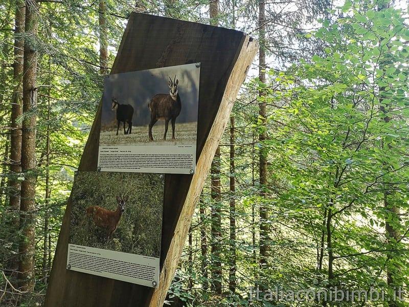 Sentiero delle Sorgenti - Alpe Cimbra- cartello con animali