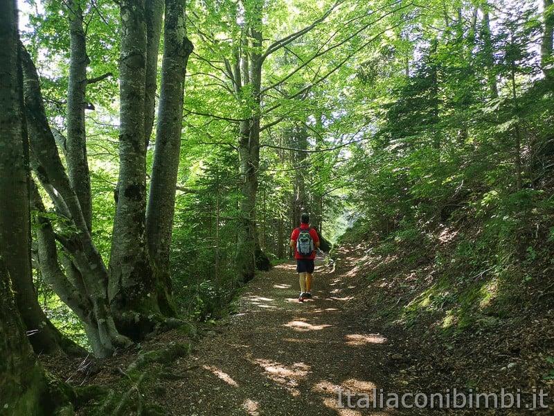 Sentiero delle Sorgenti - Alpe Cimbra- nel bosco