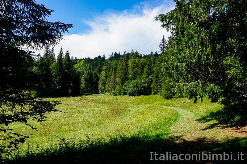 Sentiero delle Sorgenti - Alpe Cimbra- sentiero nel bosco