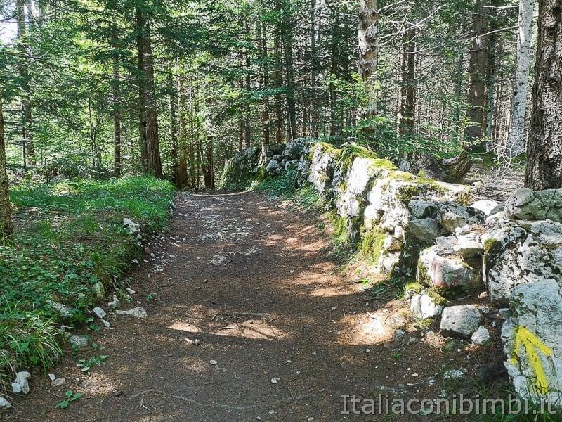 Sentiero delle Sorgenti - Alpe Cimbra- sentiero nel bosco_1