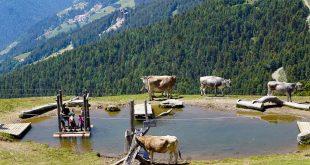 WoodyWalk sulla Plose- bimbi sulla zattera nel laghetto di Rossalm