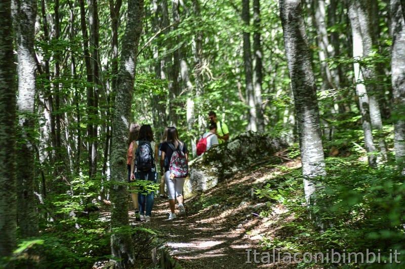 Lama Bianca Majella- amici nel bosco