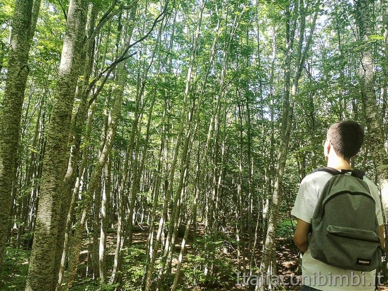 Lama Bianca Majella- bambino nel bosco
