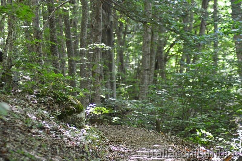 Lama Bianca Majella- bosco e sentiero