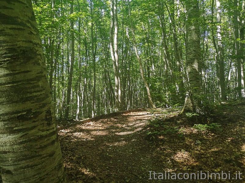 Lama Bianca Majella- passeggiata nel bosco
