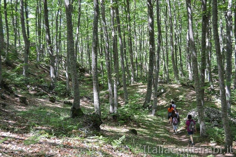 Lama Bianca Majella- sentiero e bosco