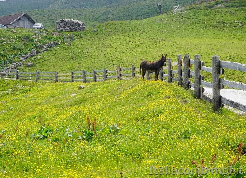 Mondo avventura montagna- asino