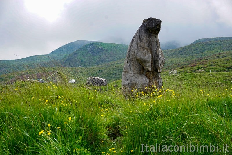 Mondo avventura montagna- marmotta
