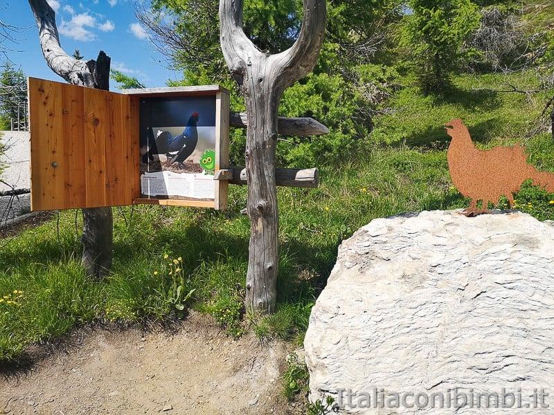 Parco natura Olperl Monte Elmo- il gallo forcello