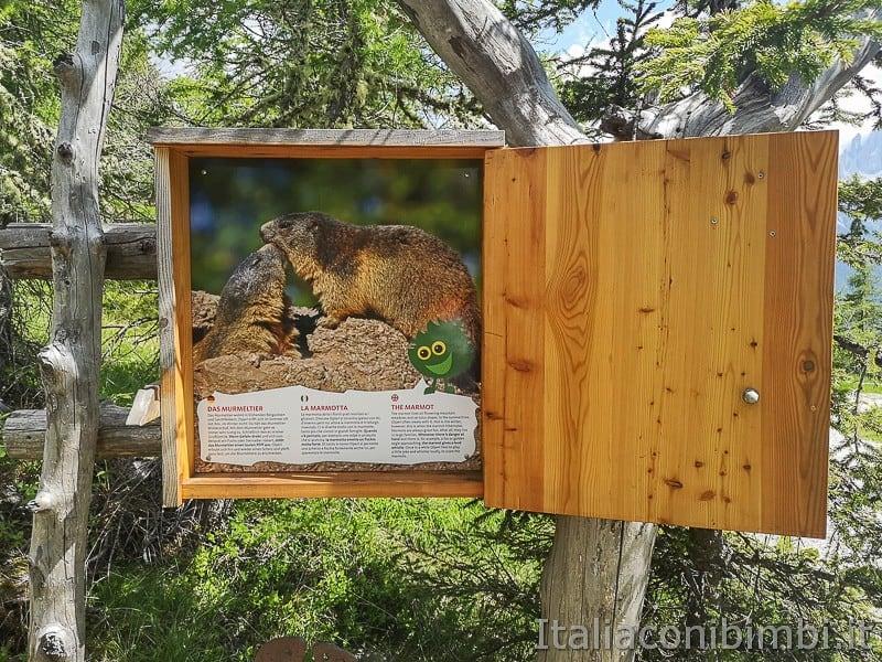 Parco natura Olperl Monte Elmo- la marmotta