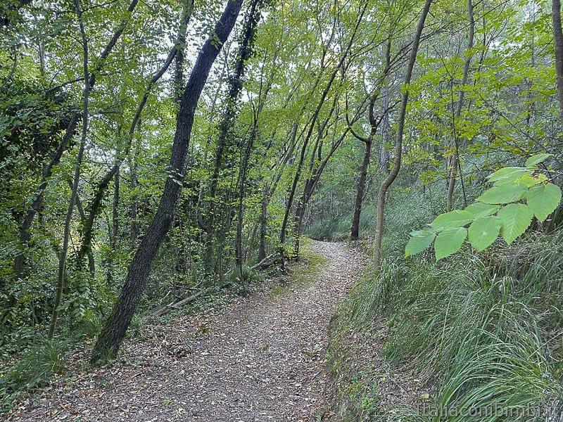 Bosco del Cugnolo-Torre-di-Palme-alberi