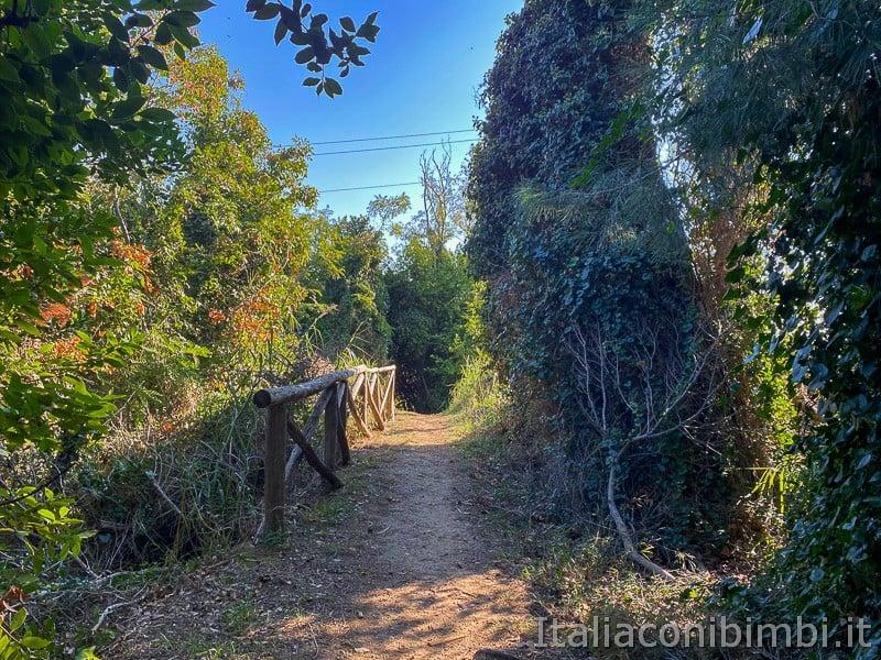 Bosco-del-Cugnolo-Torre-di-Palme-sentiero-piante