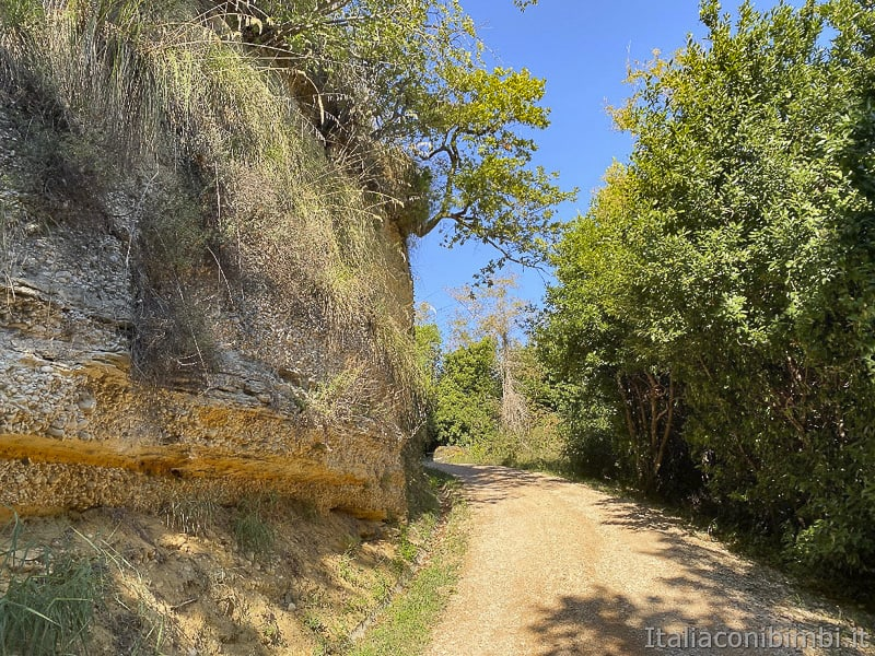 Bosco del Cugnolo-Torre-di-Palme-sentiero-ultima-parte