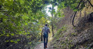 Bosco del Cugnolo-Torre-di-Palme-vegetazione