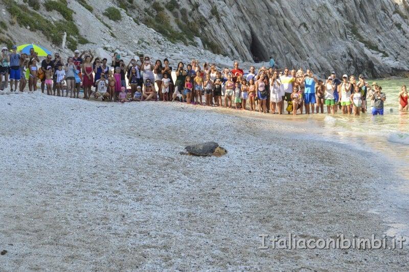 Rilascio della tartaruga spiaggia delle due sorelle - tartaruga che scende sulla spiaggia