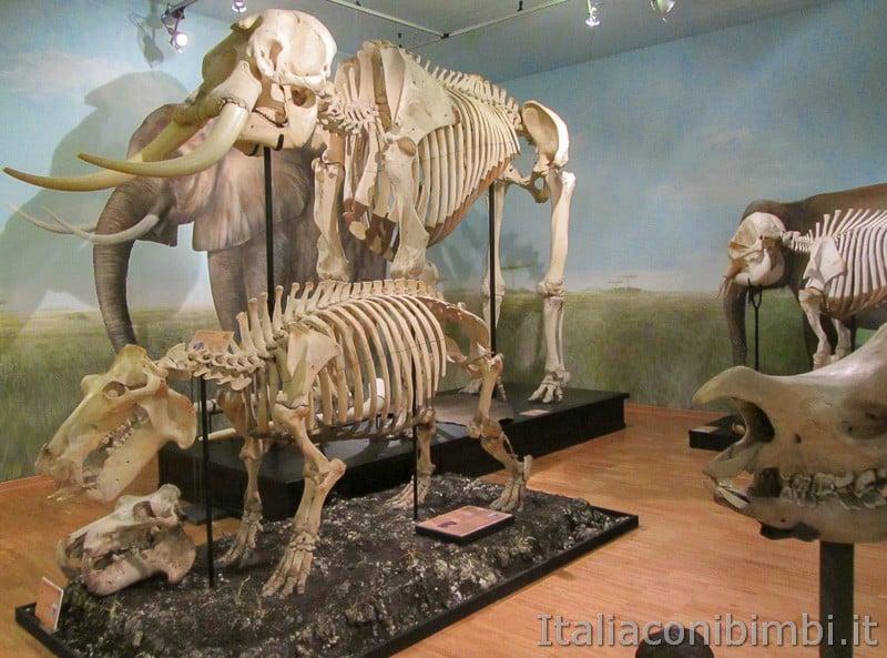 Trieste - museo di storia naturale